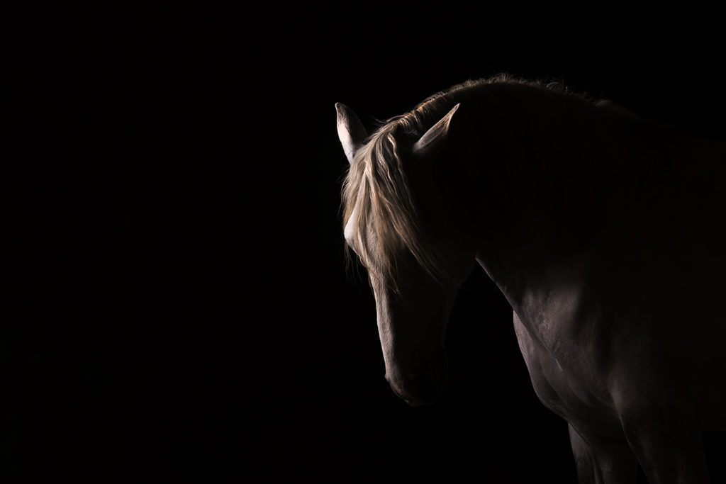 Horse Photography Shoots How To Prepare And What To Expect Equus Photographyequus Photography