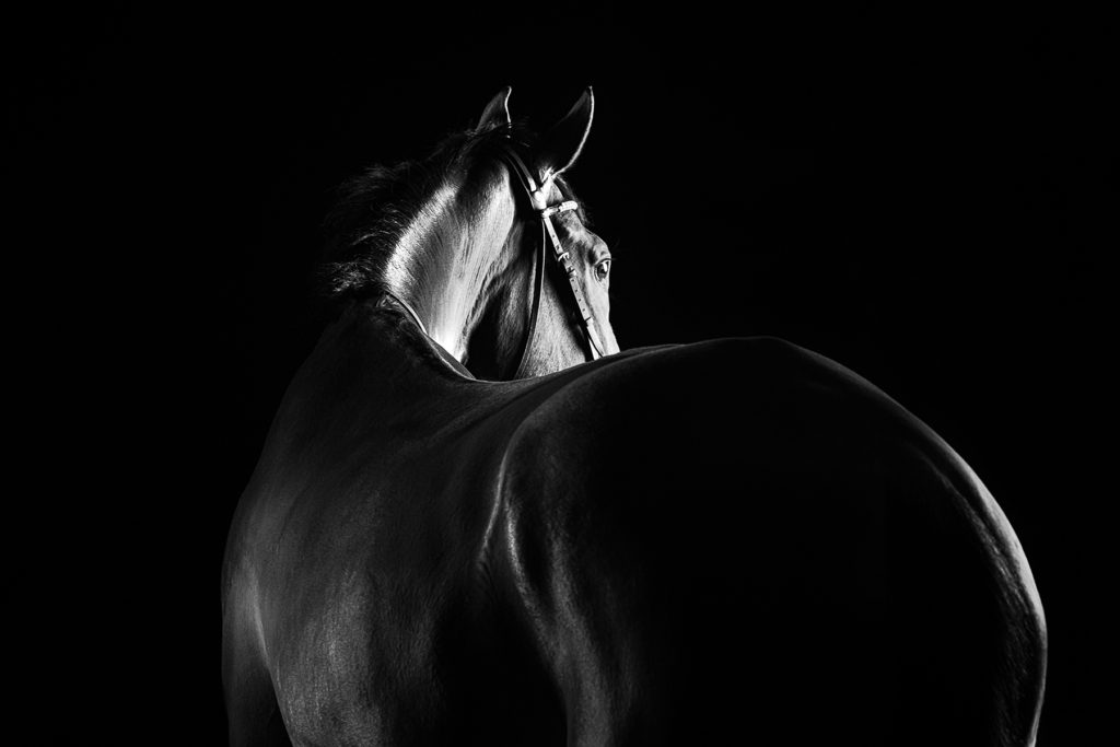 Stylish Black And White Equine Photography Equus Photographyequus Photography